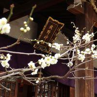 牛に願いを♪ 献梅祭の 牛天神北野神社と 梅香る 小石川後楽園