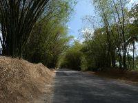 セントエリザベス バンブーアベニュー(Bamboo Avenue, St. Elizabeth)