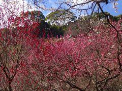暖かな熱海、伊豆山で春を感じましたーー。