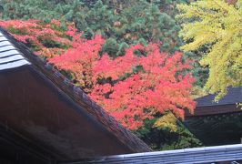 2018秋、群馬と長野の名城巡り(12/20):10月27日(2):安楽寺(2):紅葉と黄葉の境内、地蔵尊、国宝の五重塔、島木赤彦歌碑