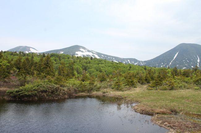 今年も梅雨の時期に4連休が取れました。<br /><br />去年は南の九州へ行ったので今年は東北へ。<br />夫は2回目わたしは初めての東北、どの県に行こうか迷いました。<br /><br />そういえば青森の奥入瀬渓流に行ってみたかったなぁと思い出し、調べてみると青森だけで見所がたくさん。<br />今回は奥入瀬渓流と津軽半島を回ることにしました。<br /><br />1日目<br />この時期に何を着ればいいのか迷いましたが、天気予報を見るとそんなに涼しくもなさそう。<br />この日は愛知とほとんど変わらず薄手のTシャツに麻のカーディガンでちょっと暑いくらい。<br /><br />まずは空港から奥入瀬渓流の間を観光しながらドライブ。<br />萱野茶屋と睡蓮沼へ立ち寄りました。<br />山の中や睡蓮沼に入っていくとまだ雪が残っていてびっくり。<br />山道はところどころ車道にも巨木がはみ出してましたが、運転しやすい道でした。<br /><br />午後は奥入瀬渓流をのんびり散策して蔦温泉に泊まりました。<br /><br />2日目<br />9時に蔦温泉を出発。<br />城ヶ倉大橋に着くと大橋の脇にあった温度計は13度!<br />寒くて凍えながらも橋の下を見ると川が遠い!<br /><br />天気が悪くて寒いのと朝ごはんをたっぷり取ってお腹が空かないのでどこか屋内で観光できる場所へと考えて、時間があったら行ってみたかったこけし会館へ寄りました。<br /><br /><br />6/5 萱野茶屋、睡蓮沼、奥入瀬渓流  <br />6/6 蔦沼、城ヶ倉大橋、弘前(城、洋館)<br />6/7 斜陽館、津軽三味線会館、竜飛岬<br />6/8 立佞武多の館、鶴の舞橋、金太郎温泉、青森市ベイエリア散策