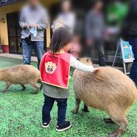 2歳8ヶ月の子連れ伊東温泉旅行②