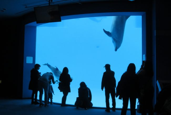 2019早春、名古屋港水族館(1/5):2月7日(1):シャチの仲良し親子、バンドウイルカ、カマイルカ