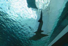 2019早春、名古屋港水族館(3/5):2月7日(3):深海の魚、初期の潜水具、バーチャル映像の魚、頭上を泳ぎ去る魚