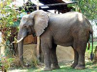 象の楽園、ロウワーザンベジ国立公園,2018/9(後半)Chongwe River Camp編