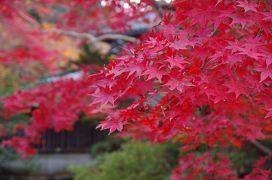 2017年11月 紅葉を見に新潟へ(1日目-2)~中野邸へ