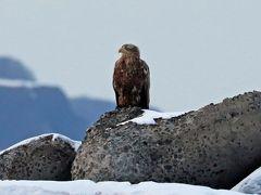 2019年2月野鳥撮影記録  Ⅴ 網走流氷の海をオーロラ号で