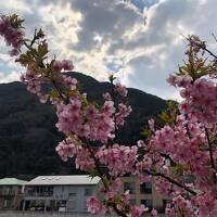 伊豆スカイライン経由でゆく河津桜と伊豆温泉