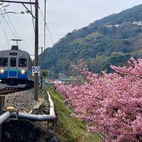 河津桜を楽しむ、春の伊豆旅。宿泊はアンダの森 いっぺき湖へ