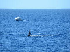 10回目ハワイ★2日目~3日目 今回はクジラを見るぞーの旅