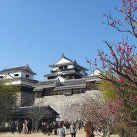 愛媛&高知の百名城巡りの旅2日目(松山城&湯築城)