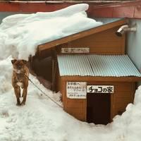 青森 碇ヶ関 : 古遠部温泉のサビ犬に会う