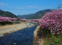 日本観光旅行記三本立て① : 河津桜で一足早い日本の春満喫