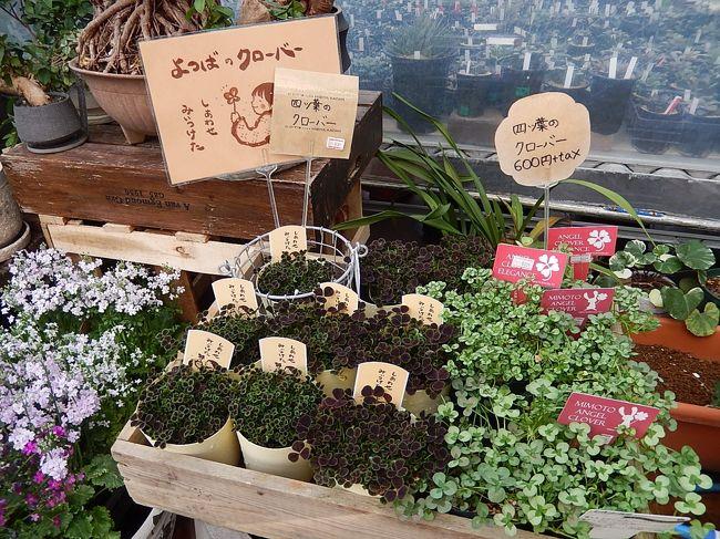 3月初め、池袋での買い物のついでに西武百貨店9階の「食と緑の空中庭園」に立ち寄り、日比谷花壇を訪問しました。<br />花の飾りや置物及び苔玉の楽しみ方等が陳列されていて面白かったです。<br /><br /><br /><br />*写真は四つ葉のクローバー