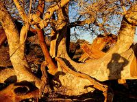 ★ナミビア+南アフリカ車旅(4)ツァウガブ川のほとり
