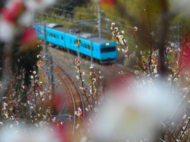 朝いちで南部梅林を巡り、少しだけみなべの町を散策。電車の写真はだいたいピンボケ。