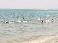 死海〜ネボ山