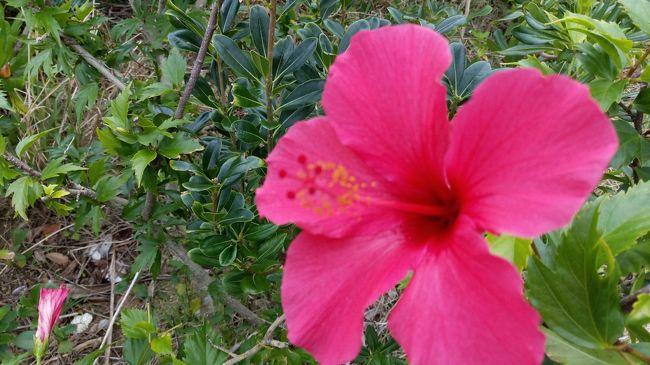 関東から避寒で奄美大島に行きました。<br />暖かい空気で早い春の香りを感じました。<br />南国の雨上がり朝は気持ちいいものです。<br /><br />いつも通り、<br />温ゆるく散歩してきました、<br />初日は古仁屋(こにや)、<br />そして、2日目は名瀬(なぜ)・・・。<br />南の島を楽しむ 自己流の奄美大島旅 。<br />2日目、3日目 をどうぞ!<br />