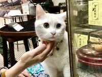 香港トラムで東へ西へ!� トラムに乗れなかった!でも西へ飲茶と舗頭猫さんに会いに行った3日目〜4日目帰国!(福建茶行 蓮香樓 源記 Art Lane 駒記海鮮)