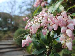 春を感じながらお散歩2/2、パワスポ三嶋大社など三島を散歩。夕飯はうなぎ桜家さん