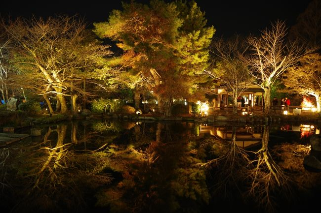 トワイライトエクスプレスが引退する、あの時振りに京都東山花灯路へ久々に行ってきました。<br /><br />1,2度目は旅ともさんと行きましたが、やはり自由に写真を撮りたいので一人でふらっとです。