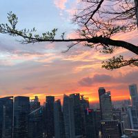 3月のシンガポール