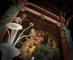 そうだ「奈良」に行こぉ。「うまき(かも)、うるわしき(かも)の奈良」#2(東大寺の大仏様編/奈良市/奈良県)