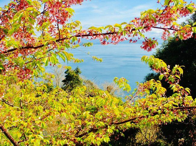 早い春を探しに愛媛県へ。<br />松山観光をあえて外した一泊二日の旅をご紹介いたしますネ。<br />岬、島(おみしま)、花、海、食べ物満載ですヨー。<br /><br />今回のコース地図を付けさせていただきました。<br />良かったらご参考くださいネー。