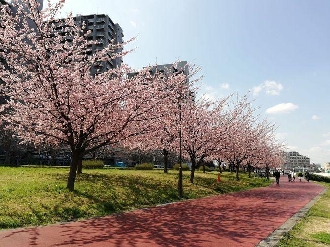 今シーズンの桜探しての目標は茨城県全域かなと漠然と探し初めたがなかなか思うようには進んでない。<br />まあ咲いてない桜探しよりも、目前の咲いてるところがいいかと出掛けたらちようどいい感じで大寒桜が見ごろでした。<br /><br />ここは大寒桜の後は陽光が楽しめる場所でもあるのでソメイヨシノが咲く前のお花見のお勧めひとつです。<br /><br />一言<br />今シーズンの予定は<br />日立市のかみね公園、十王パノラマ公園、日立駅前、利根町役場前、下妻の観桜園、笠間市の北山公園、つくば市の福岡ぜきさくら公園などを考えてます。<br />もちろん結城農場や桜川市の磯部桜川公園、岩瀬の雨引観音、静峰ふるさと公園は忘れてないです。