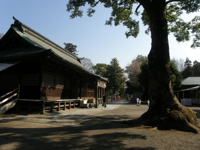 毎日の早朝ウォーキングコースの一部に、河津桜の並木があり、毎日、蕾から開花に至るさまを見ながら歩いていました。<br />昨日の早朝ウォーキングの際、ほぼ満開に近い開花状態になったので、家内に河津桜を見ながら歩かないかと誘うと、是非歩きたいとの返事で、即、河津桜並木を歩き、鷲宮神社に参り、野辺の花を見ながら歩くことにして、今日の早朝ウォーキングの代替えで歩くことにしました。<br />