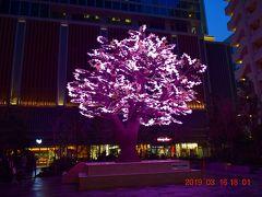 日本橋 桜フェスティバル2019で一足早いLED桜イルミネーション