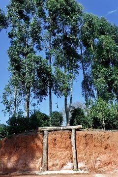 世界中からバイヤーが集まる、最高品質のブラジル珈琲豆を産出する地:Carmo de Minas(ミナスジェライス州/ブラジル)#1