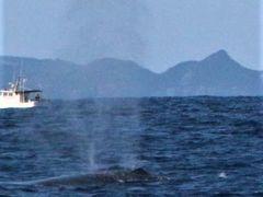 どこかにマイルで沖縄へ!98%遭遇率のホェールウォッチングと消失した首里城@カフーリゾートコンドフチャク