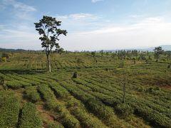 バリ島+ジャワ島横断+シンガポール旅2018 13日目:バンドン1日観光!チャーターカーで茶畑へ