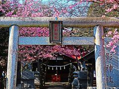 船橋-1 星影神社 春うらら 二和開拓地の鎮守さま ☆土地区画整理事業も成し遂げ
