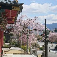 平成最後のお花見�まずは身延山から by 日帰りバス