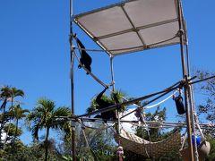 長男と行くハワイ3泊 カピオラニ公園その1 ホノルル動物園