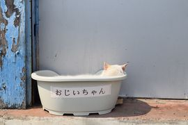日本にあるブラジル 日曜日に 群馬県 大泉町へ。