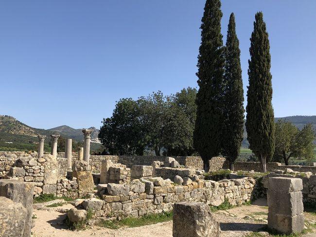フェズ迷路散策 ローマ遺跡ヴォルビリスへ