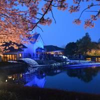 湯の山温泉と愛知のしだれ梅となばなの里と椿大神社