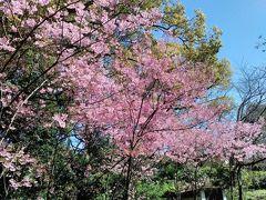 桜咲く初春の福岡を散策しました。