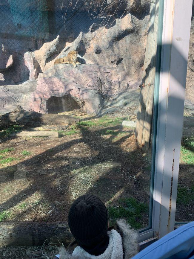 2019年1月 東山動植物園 日帰り電車旅