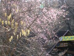 動物園で春の息吹を感じて~早春の花と桜の開花~