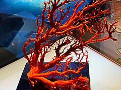 沖縄-9 古宇利島 シェル-貝-ミュージアム 1万点も ☆リュウグウオキナエビスは貴重種