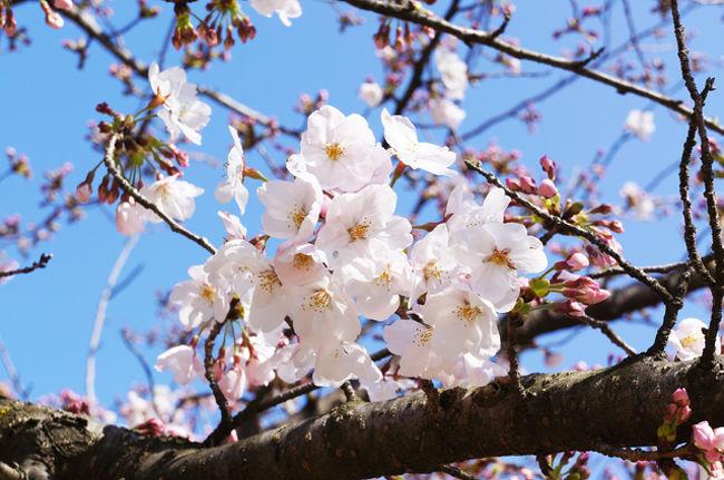 ふらっと四国・愛媛県<br />松山空港から香川方面の東予まで<br />風情ある四国の山々と瀬戸内の島々を眺めて癒され、愛媛3大城?のふたつを制覇、サクラも眺めて季節を感じてきました。<br /><br />往路は城ナシ、サクラナシで老舗の麻婆豆腐をいただきます。