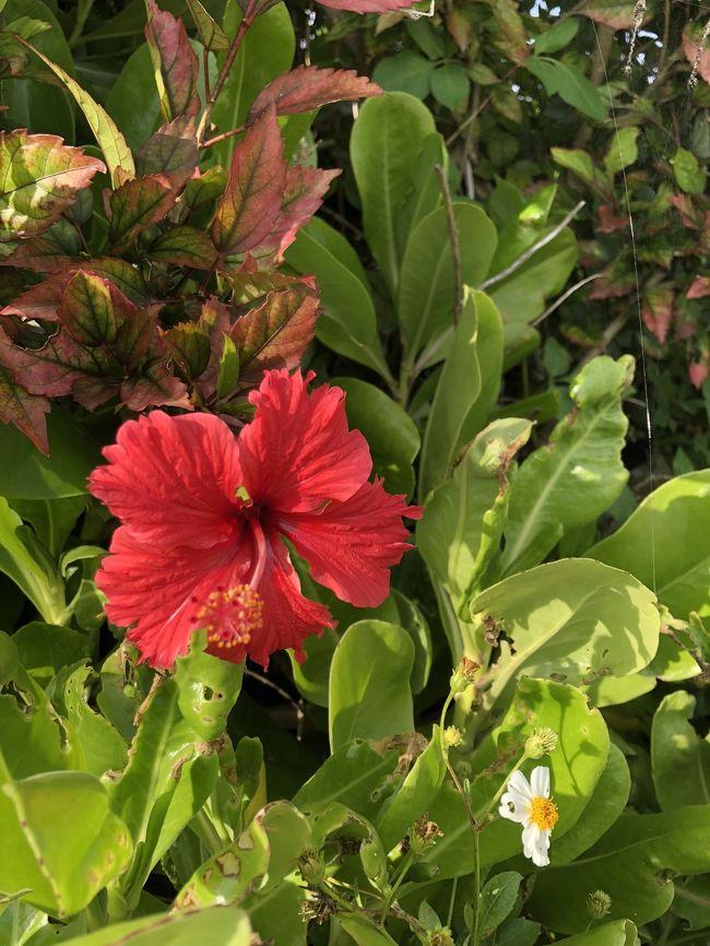 1歳半娘はじめての沖縄本島の旅<br />3泊4日美ら海、カフーリゾートフチャクホテルでまったり旅<br />※はじめてフォートラベルでの記録です<br />