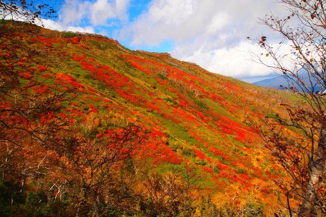 去年は同じ大雪山系でも旭岳の紅葉を見に行きました。<br /><br />ちょっと土地勘もできたので、続けて今年は黒岳・層雲峡方面へ紅葉の旅。<br /><br />銀泉台の紅葉の模様です。<br /><br /><br /><br />最後にバス情報を載せました。<br /><br />余談ですが、層雲峡からちょっと銀泉台方面へ行くだけで、ソフトバンクの電波は全く入りませんでした。山で遭難したら・・・