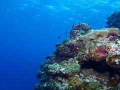 3月の石垣島でダイビング