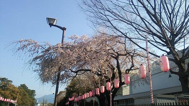 静岡デステネーションキャンペーン勝手に記念企画第1弾 2019.3.27 静岡のサクラ
