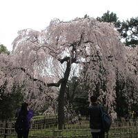 京の都の歩き方 今出川から二条